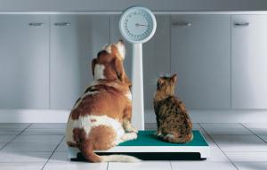 Tierarztpraxis_Baern_West_Uebergewicht_ Hund_Katze