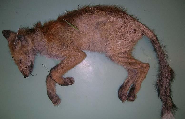 Räude Tierarztpraxis Bärn West